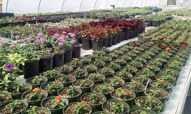 Guilford County Prison Farm Greenhouses to See BEST Days Yet with Hydroponic Farming